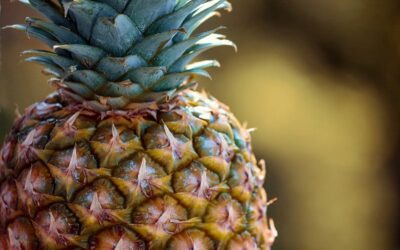 ananas biljka