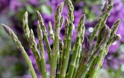 šparoga biljka