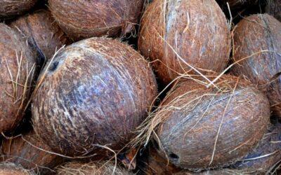 kokos plod
